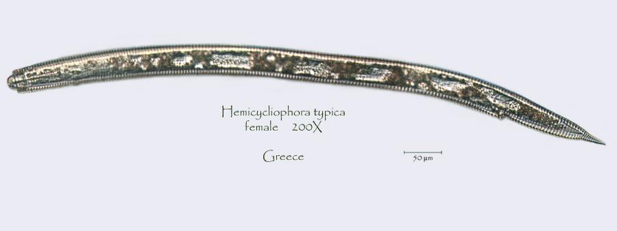 greec
