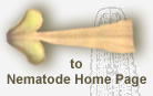 Link to Plant and Insect Parasitic Nematode Home page